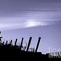 Napa Moonglow by Ellen Cotton