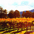 Napa Valley Vineyard In Autumn Colors 2 by Wingsdomain Art and Photography