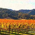 Napa Valley Vineyard In Autumn Colors by Wingsdomain Art and Photography