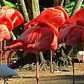 Napping Flamingoes by Vijay Sharon Govender