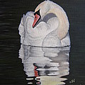 Napping Swan by S V