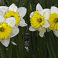 Narcissus by Michael Friedman
