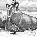 Native Amerians: Cutting Buffalo by Granger