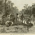 Natives Of Many Southeastern Tribes by Everett