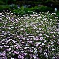 Natural Carpet by Susan Herber