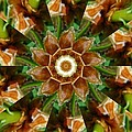 Natural Pinwheel by Rhonda Barrett