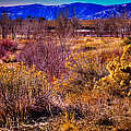 Nature At It's Best In South Platte Park by David Patterson