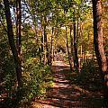 Nature Trail by John Malone