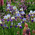 Natures Bouquet by Jim Garrison