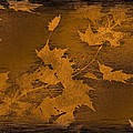 Natures Gold Leaf by Tim Allen