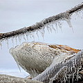 Natures Ice Sculptures 3 by Rose Santuci-Sofranko