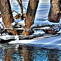 Nature's Icy Abstract No.2 by Janice Adomeit