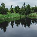 Natures Mirror by Heather Applegate
