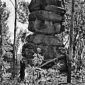 Nature's Statuette  by Douglas Barnard