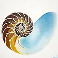 Nautilus  by Kraichely Michael
