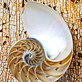 Nautilus Shell On Rusty Table by Garry Gay