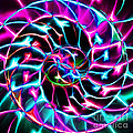 Nautilus Shell Ying And Yang - Electric - V2 - Violet by Wingsdomain Art and Photography