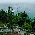 Ne Harbor Maine Seen From Thuya Gardens Mt Desert Island  by Lizi Beard-Ward