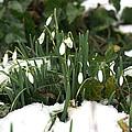 Nearly Spring by David Birchall