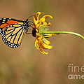 Nectar Delight by Adam Jewell