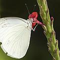 Nectar by Don Durfee