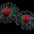 Neon Daises by Cindy  Whitehead