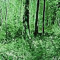 Neon Forest by Sarah E Kohara
