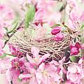 Nest In Soft Pink by Stephanie Frey
