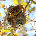 Nesting Instinct by Carol Groenen