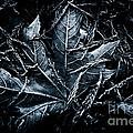 Nestled In The Pine by Venetta Archer