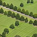 Netherlands, Margraten World War II Cemetery by Frans Lemmens