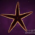 Netted Sea Star by Raul Gonzalez Perez