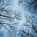 Neural Network by Heidi Reyher