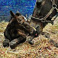 New Born Foal by Terry Sita