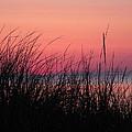 New Dawn by John Wanserski