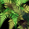 New Ferns by Amanda Moore
