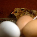 New Hatching by LeeAnn McLaneGoetz McLaneGoetzStudioLLCcom