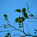 New Leaves by Diana Hatcher