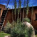 New Mexico Adobe by David Patterson
