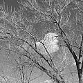 New Mexico Series - A Cloud Behind Black And White by Kathleen Grace
