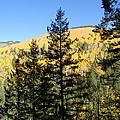 New Mexico Series - Autumn On The Mountain II by Kathleen Grace
