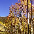 New Mexico Series - Autumn On The Mountain by Kathleen Grace