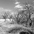 New Mexico Series - Bare Beauty by Kathleen Grace