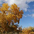 New Mexico Series - Desert Landscape Autumn by Kathleen Grace