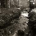 New Mexico Series - Late Winter Streambed by Kathleen Grace