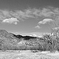New Mexico Series - Winter Desert Beauty Black And White by Kathleen Grace