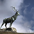 New Orleans Stag Statue by Jim And Emily Bush