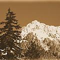 New Snow by Carri Schutter