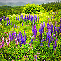Newfoundland Meadow by Elena Elisseeva