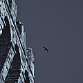 Night Flight by Michele Mule'